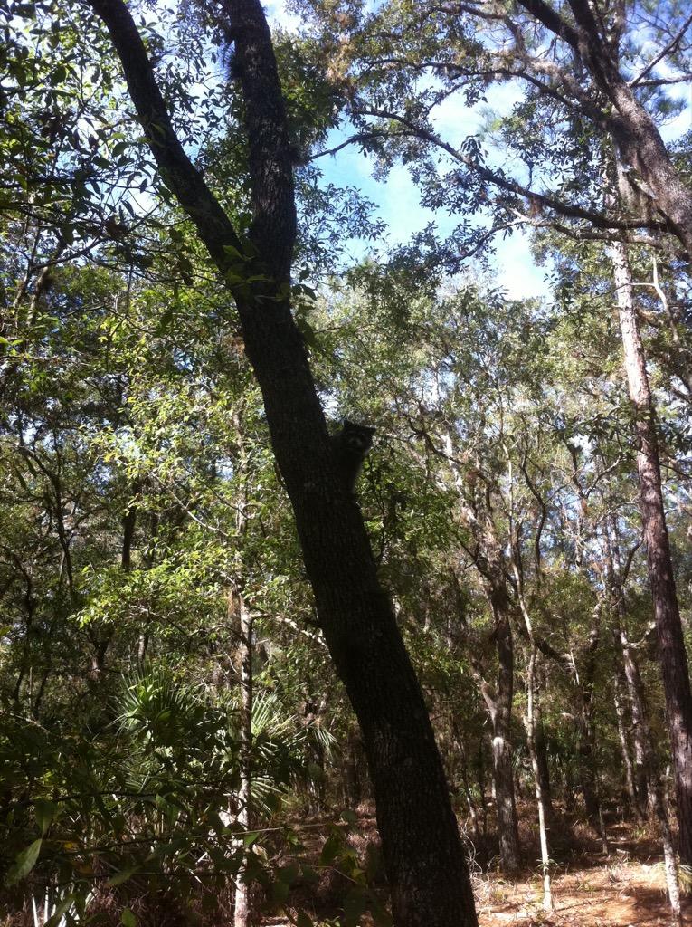 Highlands Hammock State Park Florida